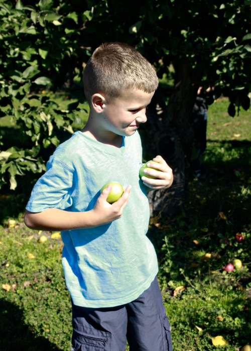 M apple 7