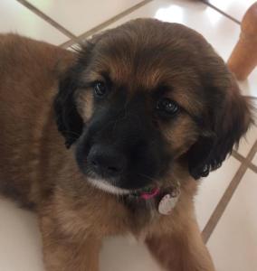 finley puppy